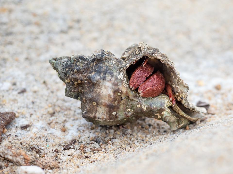 bernard-hermite